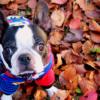 紅葉もお食事も堪能しちゃおう♪東京郊外で愛犬と秋散歩が楽しめるスポット&飲食店特集!