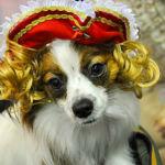 愛犬も仮装してハロウィンパレードに参加してみよう!ハロウィンイベント特集!