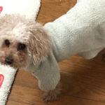 超簡単!短時間で作れる、古着を使った小型犬用のルームウエア(部屋着)づくり