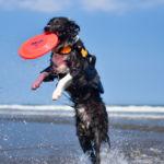 秋こそ愛犬とビーチへ!海岸に持って行きたいギアやケアグッズ集