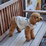 海沿い散歩にかかせない!愛犬と一緒に入れる湘南エリアのカフェ 5選