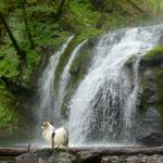 童話の世界が群馬県嬬恋村にあった!愛犬と冒険したくなるスポット集