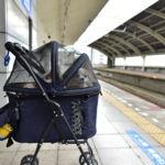 [今更聞けない] 愛犬を連れて電車の乗り方TIPS&B実戦