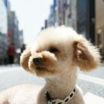 東京の住みたい街ランキング常連の街「吉祥寺」は愛犬も住みやすい!?