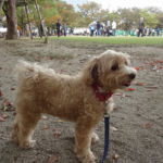 愛犬と一緒に運動不足とは無縁の生活♪神奈川県の愛犬と遊べる公園7選