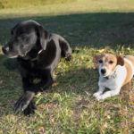 カリスマドッグトレーナー「シーザー・ミラン」から学ぶ犬のしつけ