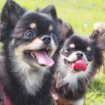 愛犬と思いっきりはしゃいじゃおう!関東近郊の愛犬と行けるテーマパーク7選