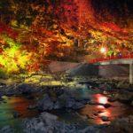 幻想的な日本の夜を…東海エリアで愛犬と一緒に紅葉のライトアップを鑑賞しよう!