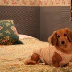 愛犬と一緒に贅沢気分!ワンちゃんウェルカムな有名ハイクラスホテル5選