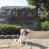 <秋の伊豆高原旅行Part1>愛犬と一緒にハイキング!一碧湖・沼池&松川湖・奥野ダム