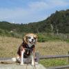 愛犬と一緒に二泊三日旅行!御宿町のおすすめお散歩コース<千葉県夷隅郡>