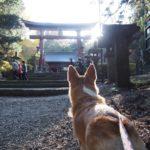 愛犬と秋の富士山ドライブPart2〈パワースポットで有名な北口本宮冨士浅間神社〉