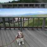 11月14日、日本一の人道吊り橋「三島スカイウォーク」にドッグランがオープン!