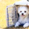 チェックリストで素早くポイントを確認!愛犬のための防災について考える