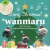 12月17日、愛知県半田市でわんこマルシェ『わんマル半田』が開催されます!