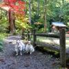 店内OKの茶屋も!静岡県で愛犬と一緒に紅葉も楽しめる「小國神社」潜入レポ