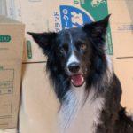 突然の引越し!?転勤族が教える愛犬への負担を最小限にする為のTIPS