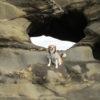 今年の締めは愛犬と一緒に城ヶ島7kmハイキング<神奈川県 三浦市>