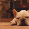 冬こそ訪れてみたい!愛犬と泊まれる薪ストーブのあるコテージで非日常空間を満喫<群馬県>
