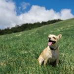 【富士山のまち 富士宮市にクローズアップ!】愛犬と一緒に行きたい!自然を満喫できるスポット8選
