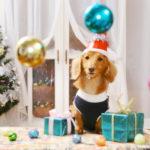 愛犬と過ごすクリスマスにもオススメ!ちょっと贅沢な食事が楽しめるレストラン5選