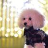 今夜は愛犬とロマンチックな夜を!関東でワンちゃんとイルミネーションを楽しめるスポット7選♪