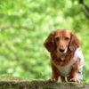【静岡市清水区にクローズアップ!】愛犬と一緒に行きたい!景色が綺麗でオープンな自然公園&有名観光スポット6選