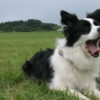 【富士山のふもと 朝霧高原にクローズアップ!】愛犬と一緒に楽しめるスポット6選