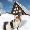 愛犬と一緒に世界遺産巡り、冬の「白川郷」へ潜入!<岐阜県>
