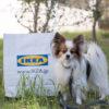 2017年10月オープンのIKEA長久手店へ!IKEAペット用品「ルールヴィグ」12月から登場した新アイテムを調査