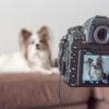 愛犬をもっと楽しく撮る為の撮影術!「色」の法則を知ろう