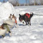 愛犬と雪遊びデビュー計画大作戦!オススメの関東周辺ペット可宿特集付き!