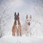 【3月下旬まで雪を満喫】人気の日光・那須周辺で愛犬と一緒に冬の雪遊び旅行!