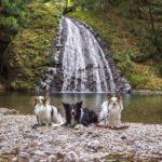 愛犬と新東名高速道路「浜松いなさIC」途中下車の旅!ペット同伴OK「天小屋」~日本の滝100選「阿寺の七滝」
