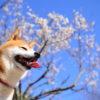 2月中旬から楽しめる!愛犬と行く伊豆半島の梅園おすすめスポットと梅まつり