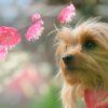 1月上旬から3月上旬まで見頃!梅も桜も同時に楽しめる「熱海梅園 梅まつり」&「糸川桜まつり」
