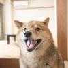 冬の贅沢グルメの旅は北陸に決まり!愛犬と一緒に泊まれる宿5選<新潟・福井編>
