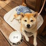 愛犬と一緒にハーブ&スイーツがあるおしゃれなカフェへ!千葉県の房総半島からおすすめスポット3選