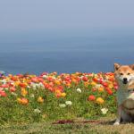1月~5月、冬こそ楽しめる千葉県房総半島のおすすめフラワーパーク!