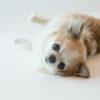 愛犬を上手に撮影するテクニックが学べる!? 2月24日WANCOTT(横浜)で「ワンちゃんポートレイト撮影講座」を開催!