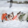 無料で楽しめる!愛犬と雪遊びが出来る「原山市民公園」にはドッグランも!<岐阜県高山市>