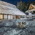 幻想的な冬のライトアップは2月末まで!愛犬と一緒に「飛騨の里」へ潜入レポ!<岐阜県高山市>