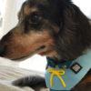 3COINSの犬グッズが熱い!プチプラで可愛いアイテムが続々登場