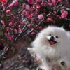 東北へ行こう!おすすめ梅の名所&ドッグカフェで愛犬と楽しむ春の休日~♪<宮城県・福島県>
