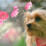 春の訪れを感じながら愛犬と一緒に散策しよう!都内でおすすめの梅の名所6選