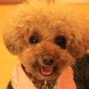 いつも愛犬と一緒がいい♪ワンちゃんと一緒に夕食が食べられる東北地方のお宿特集<福島県>
