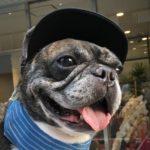 保護犬を家族にむかえて~フレンチブルドッグの特徴や魅力について~