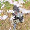 愛犬と一緒にお散歩しながら楽しめる九州のお花見スポット特集♪