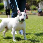 日本の闘犬の歴史とは?闘犬文化が続いている地域もある!