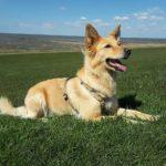 愛犬を不慮の事故から守るために絶対に教えたほうがいい3つのしつけ